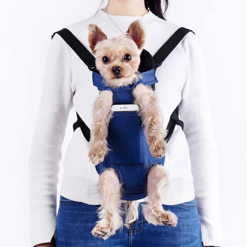 Yorkshire Terrier Carrier