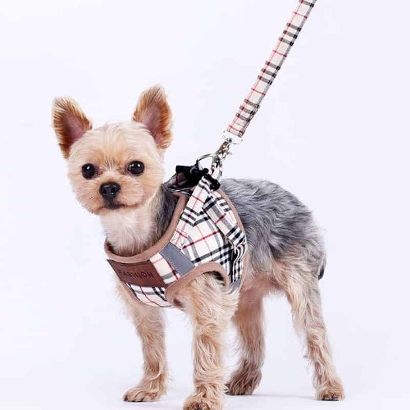 Yorkie Harness & Leash Set • Yorkies Gram