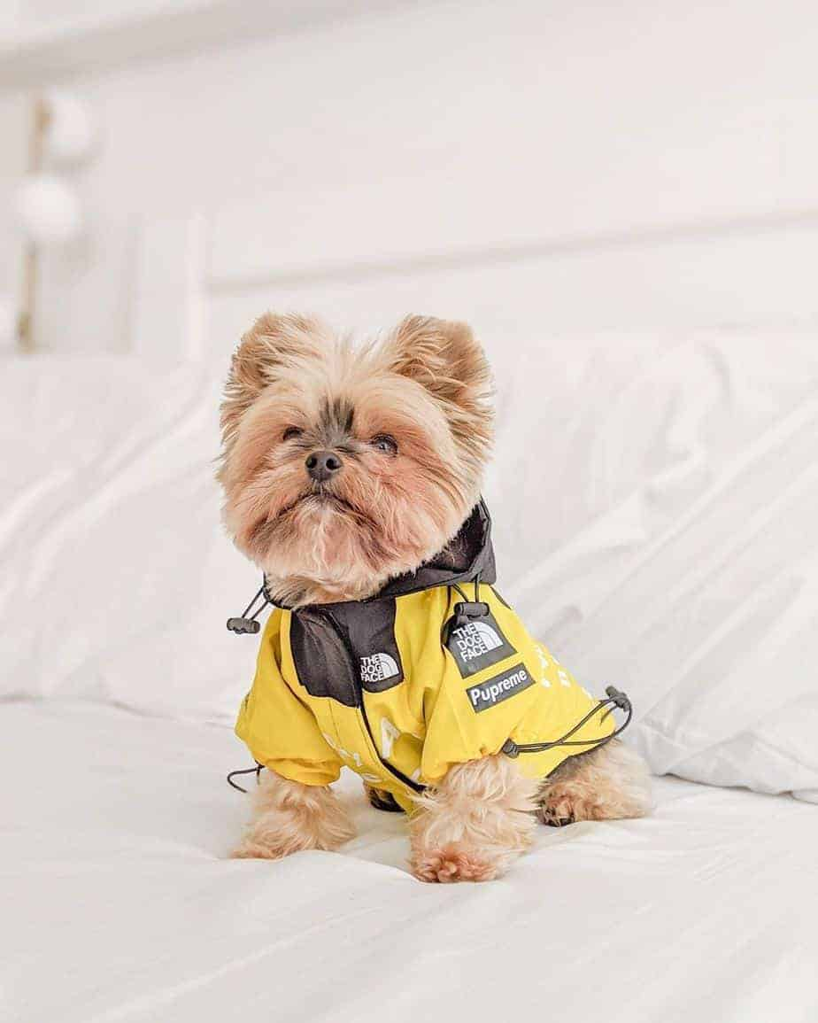 B.A.T.N. Dog Windbreaker • Yorkies Gram