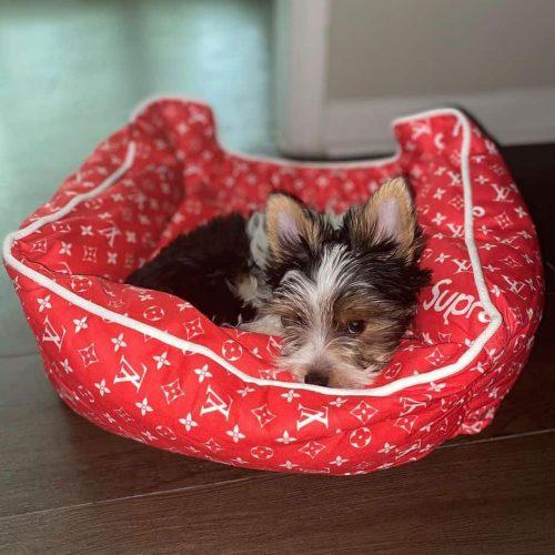 Red-Pawpreme-Designer-Dog-Bed